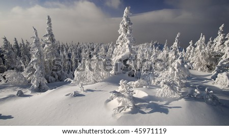 Bright sunny winter evergreen forest at Urals, Russia - stock photo