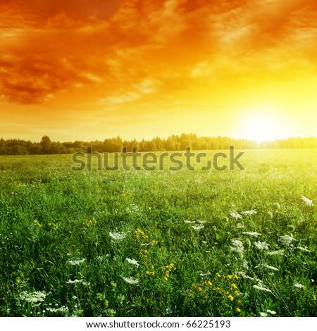 Bright sunset and summer meadow.
