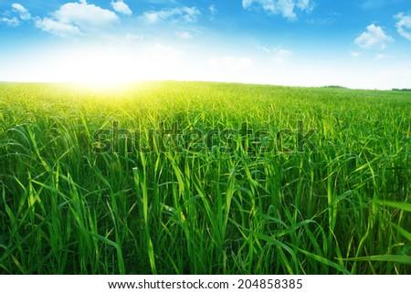 Bright sunset over green grass field. - stock photo