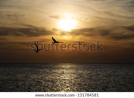 Bright sunset panorama with flying birds under the sea surface