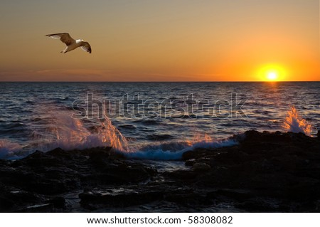 Bright sunset under the storm sea with waves splashes and flying seagull - stock photo