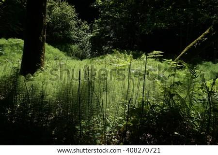 Bright tall green grass, California - stock photo