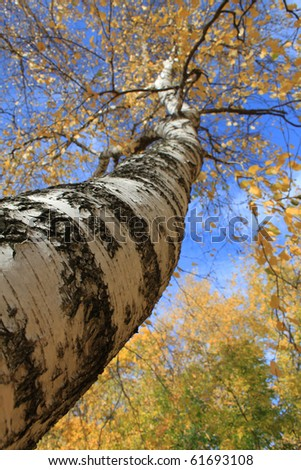 Bright trees in the autumn in park - stock photo