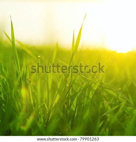 Bright vibrant green grass close-up - stock photo