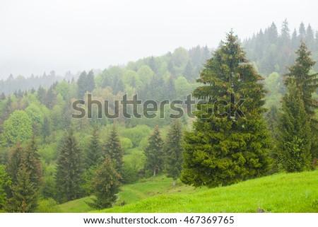 Bright view of summer environment with green forest and mist above high mountains