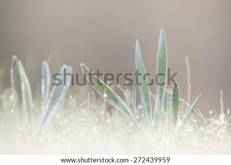 Bright wet morning with grass in sunlight - stock photo
