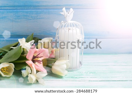 Bright white daffodils and tulips  flowers, candle  in ray of light on turquoise  painted wooden planks against blue wall. Selective focus. Place for text.  - stock photo