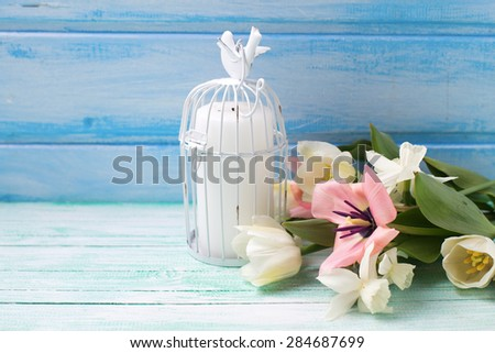 Bright white daffodils and tulips  flowers, candle on turquoise  painted wooden planks against blue wall. Selective focus. Place for text.  - stock photo