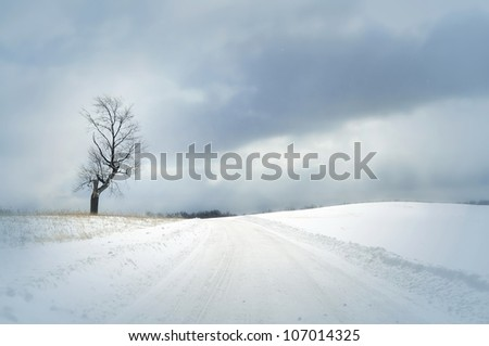 bright winter day with snow covered road and single tree and beautiful clouds - stock photo