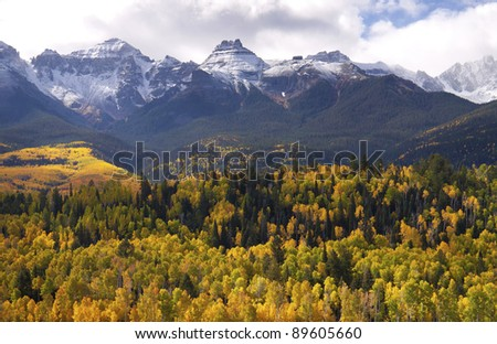 Bright yellow Aspens dotted with dark green fir trees with snow capped mountains in the background. - stock photo