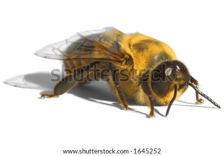 Bright Yellow Bee ~ Drone - stock photo