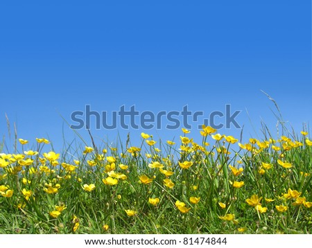 bright yellow buttercups against a blue sky - stock photo