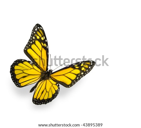 Bright Yellow Butterfly Isolated on White - stock photo