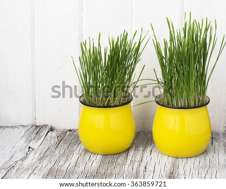 Bright yellow ceramic cups with young sprouts of green grass on a simple white wooden background. selective Focus - stock photo