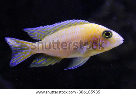Bright yellow fish in neon light on a black background - stock photo