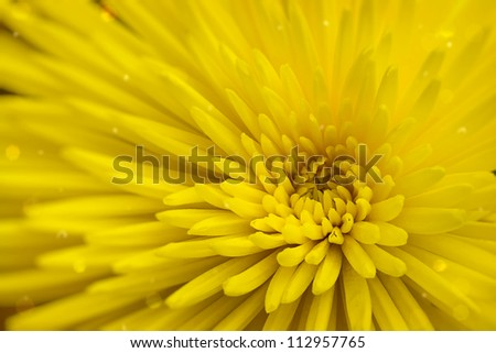 Bright yellow flower close up