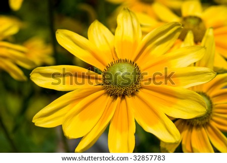 bright yellow flower during summer