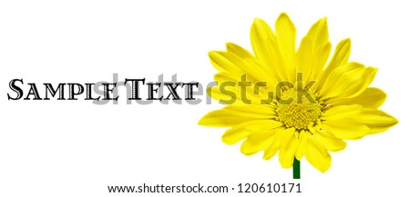 Bright Yellow Flower Isolated on White
