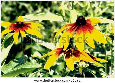 bright yellow flowers - stock photo