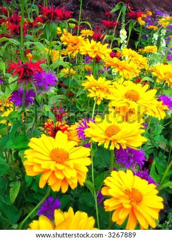 Bright yellow flowers in summer season - stock photo