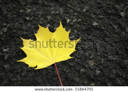 Bright, yellow leave on dark, black street. - stock photo