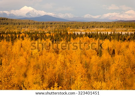 Bright yellow leaves fill the valley around the Tanana River near Delta Junction - stock photo