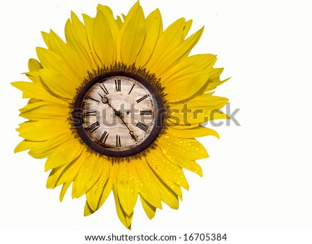 Bright yellow sunflower with antique clock - stock photo