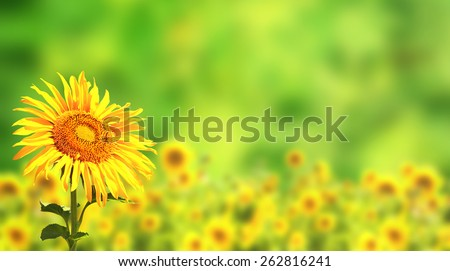 Bright yellow sunflowers on green background - stock photo