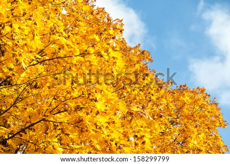 bright yellow trees in autumn forest - stock photo