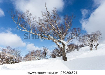 brightly-blue sky and asleep trees - stock photo