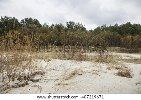 Brightly brown branches of bushes in kidneys against the wood and the rainy sky. - stock photo