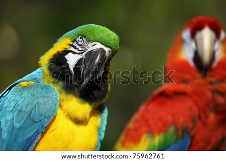 brightly colored macaw in Thailand