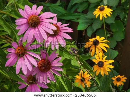 Brightly colored summer wild frowers in garden - stock photo