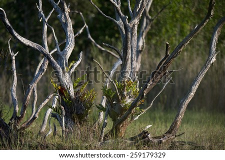 Brightly lit trees with bare trunks and branches - stock photo