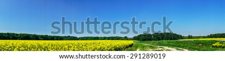 Brightly panorama of rapefield and blue sky. - stock photo
