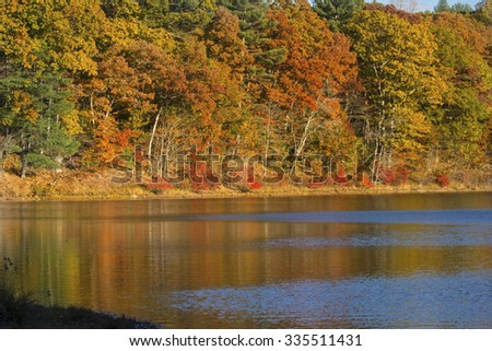 Brilliant fall foliage on the shoreline of Mansfield Lake in Connecticut, with reflections on the calm water. - stock photo