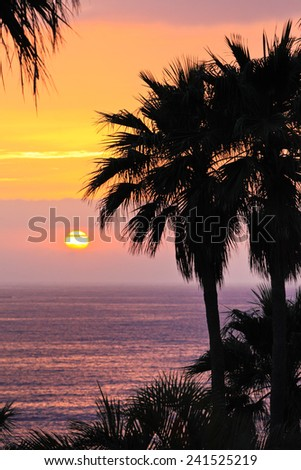 Brilliant ocean sunset with palm trees. - stock photo