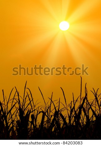 Morning blue and bright yellow sun