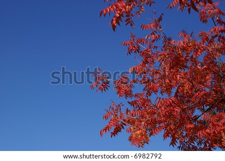 Brilliant red leaves.