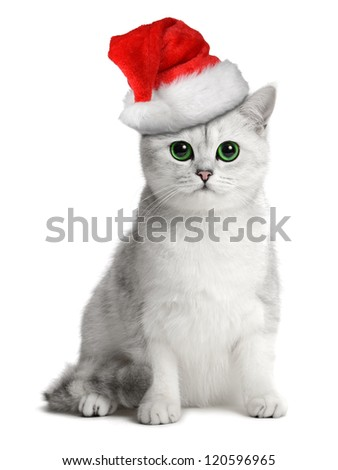 british cat in the santa hat - stock photo