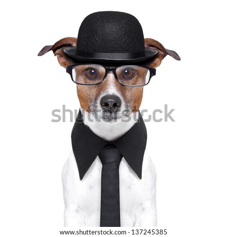 british dog with black bowler hat and black suit - stock photo