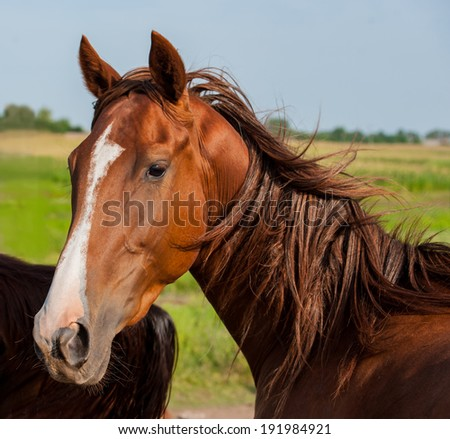 British horse portrait on background of trees on the farm, closeup