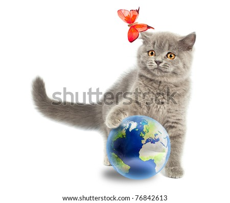 British kitten playing with earth planet isolated on white - stock photo