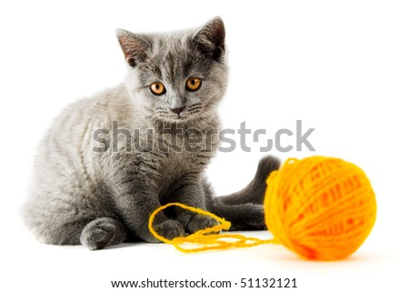 British kitten with clew isolated on white - stock photo