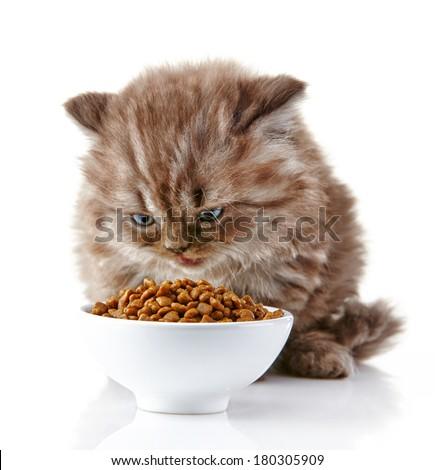 syringe feed cat