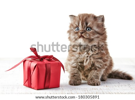 British long hair kitten and gift box - stock photo