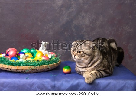 British Shorthair Cat and Easter eggs - stock photo