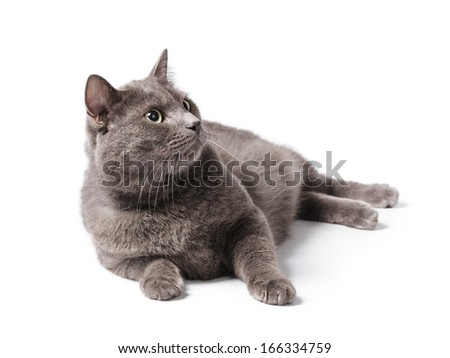 british shorthair cat with green eyes, isolated on white