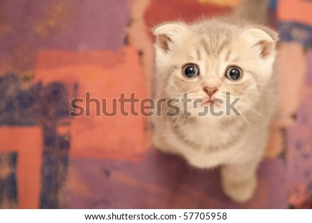 british young cat looking up - stock photo