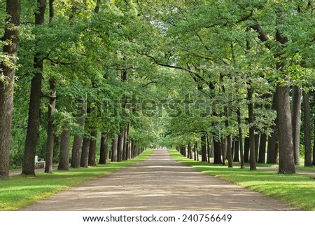 Broad Oak Alley in the old park - stock photo